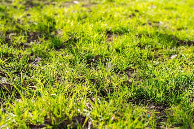 활기찬 녹색 잔디 배경