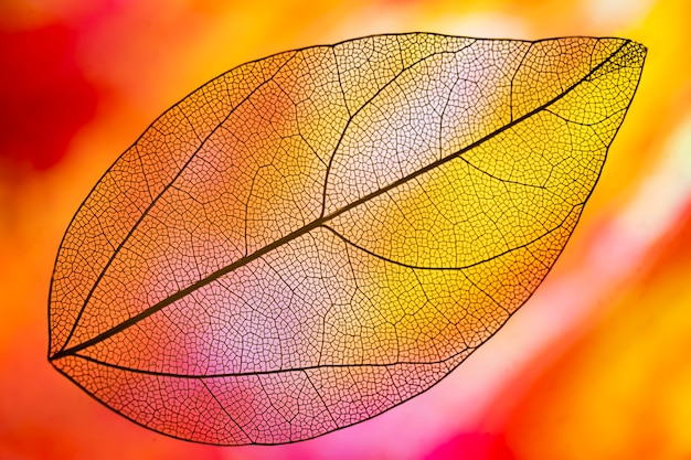 Vibrant orange colored autumn leaf