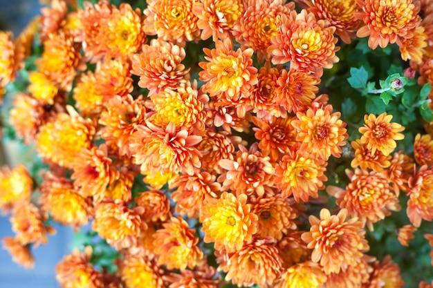 Живые оранжевые цветки закрывают вверх по макросу.