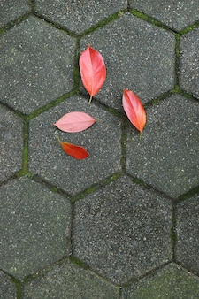 Vibrant red autumn fallen leaves on gray paving pedestrian