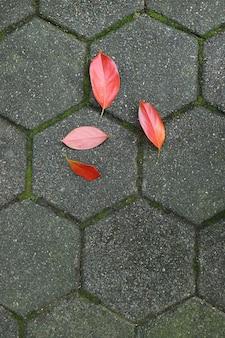 灰色の舗装歩行者に鮮やかな赤い秋の落ち葉