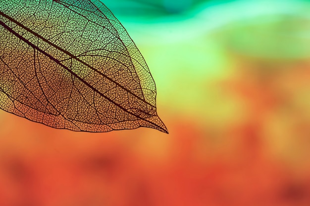 Vibrant transparent leaves with copy space