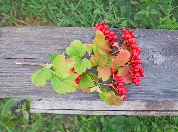 Viburnum berries  on wood