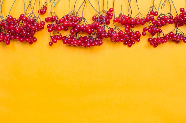 秋の組成。黄色の背景に赤いviburnumの果実で作られたフレーム