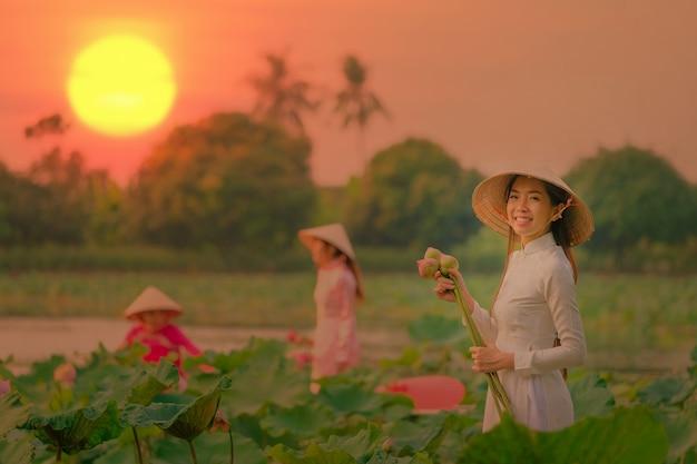 Вьетнамские женщины собирают лотос на закате.