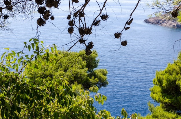 View of the adriatic sea from above through green foliage