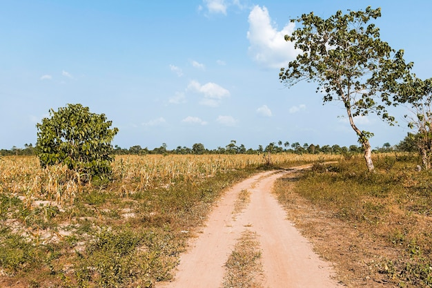View of african nature landscape with road and trees