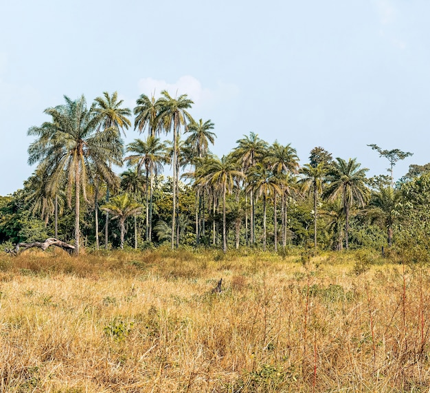 Vista del paesaggio della natura africana con alberi e vegetazione