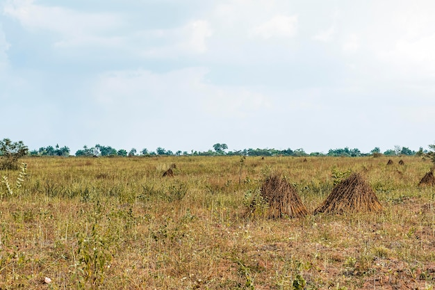 View of african nature landscape with vegetation