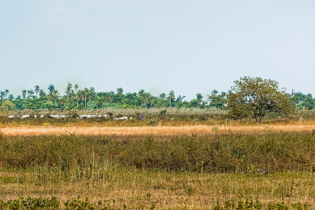View of african nature landscape