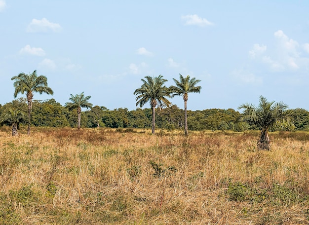 View of african nature scenery with vegetation