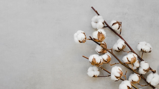 Above view arrangement with cotton flowers and branches