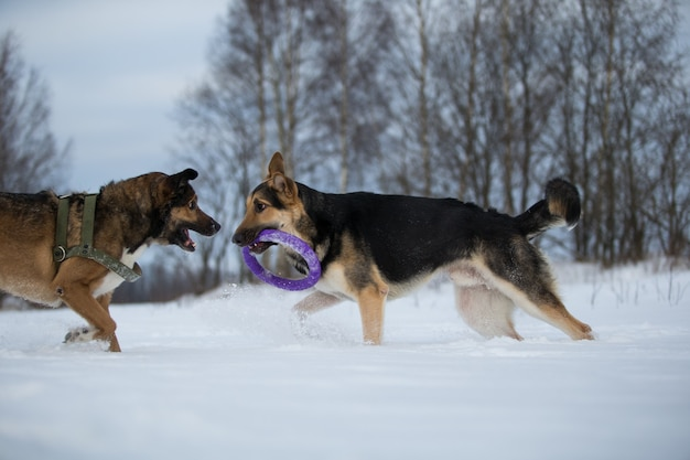 Вид на двух собак на прогулке в парке зимой