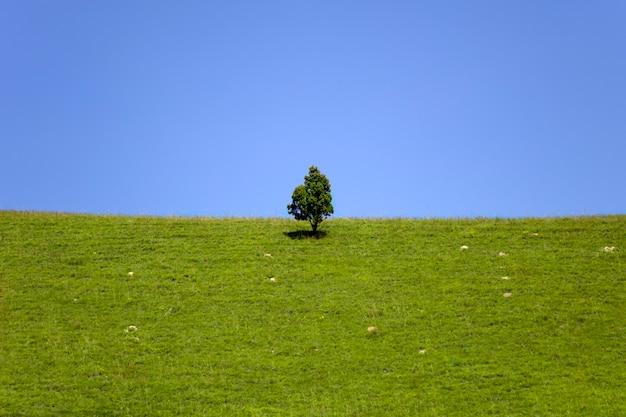 美しい緑の丘と孤独な木の春を眺める