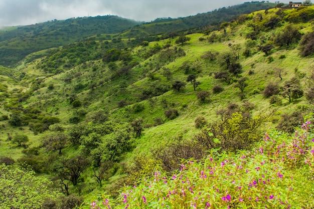 モンスーンシーズン中のオマーン、サラーラの緑の野原での眺め