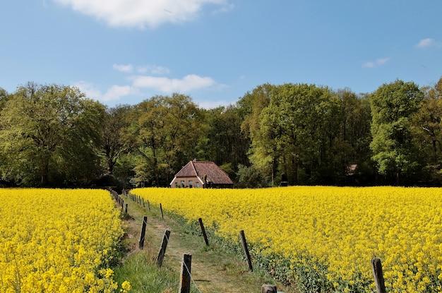 Vista di una bella casa in un campo coperto di fiori e alberi nei paesi bassi