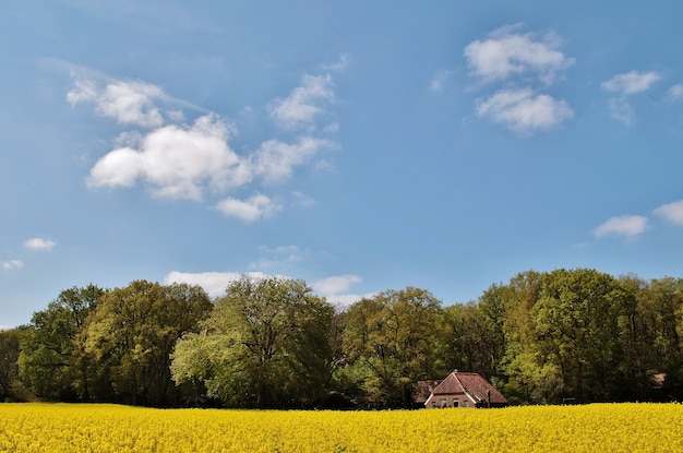 View of a beautiful house in a field covered in flowers and trees in the netherlands