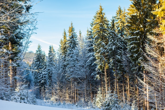 View of beautiful snowy mountains, forests
