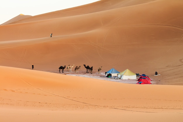 View of camp in sahara desert