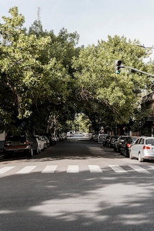 View of city street with trees and card