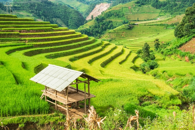 View of cottage on rice field terraced