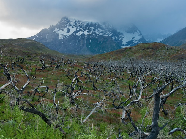 View of dead trees with mountains in the background, torres del paine national park, patagonia, chil