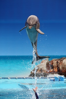View of a dolphin jumping out of the water on a waterpark.