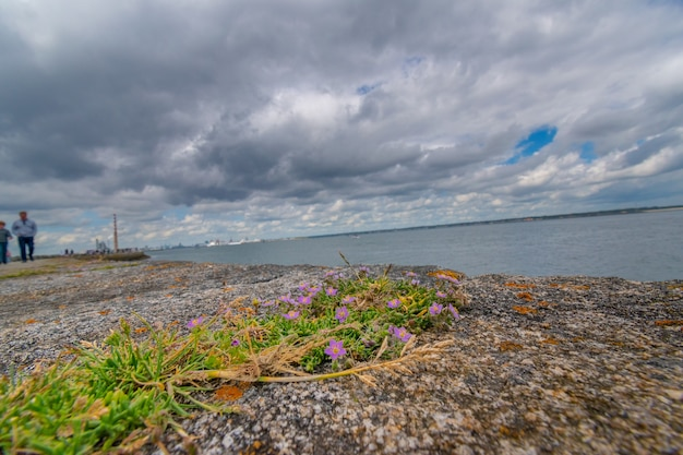 View of dublin harbour from low angle with flowers on stone at foreground.