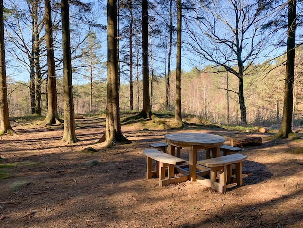 View of an empty wooden table and benches in a forest with tall old trees on a sunny day