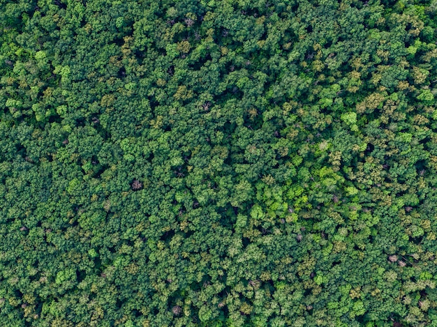 View of forest from above