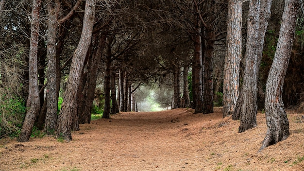 View of the forest on the island of sainte-marguerite, france