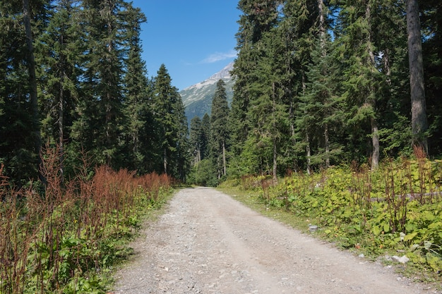 View forest scenes in national park dombai, caucasus, russia, europe. summer landscape, sunshine weather, dramatic blue sky and sunny day