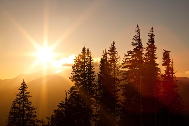 Вид сверху завораживает живописными пейзажами горных хребтов, покрытых густыми и заснеженными еловыми лесами на фоне заходящего солнца ясным зимним вечером. концепция красоты северной природы