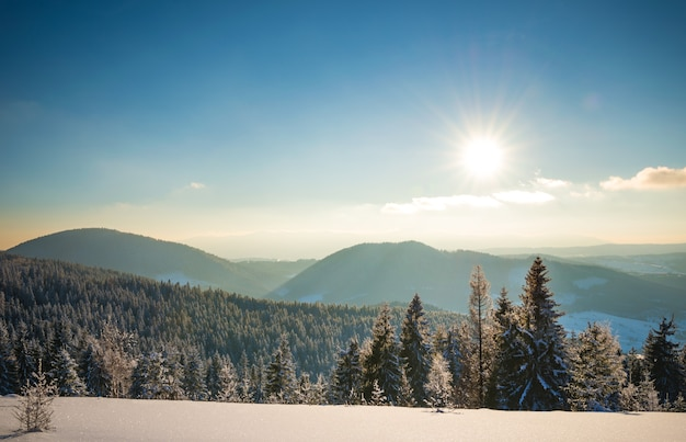 澄んだ冬の夜に沈む夕日を背景に、鬱蒼とした雪に覆われたモミの森に覆われた山脈の魅惑的な美しい風景を上から眺める