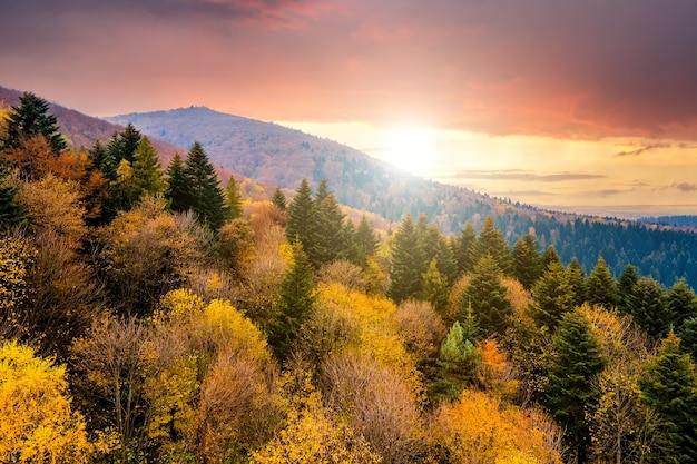 Вид сверху на густой сосновый лес с навесами из зеленых елей и красочными желтыми пышными навесами в осенних горах на закате.
