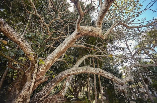 チチェンイツァのマヤの複合体の熱帯の木のいくつかの枝の下からの眺め