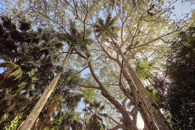 Chichã©nitzã¡マヤの複合体のいくつかのヤシの木を含むいくつかの非常に高い木の下からの眺め。