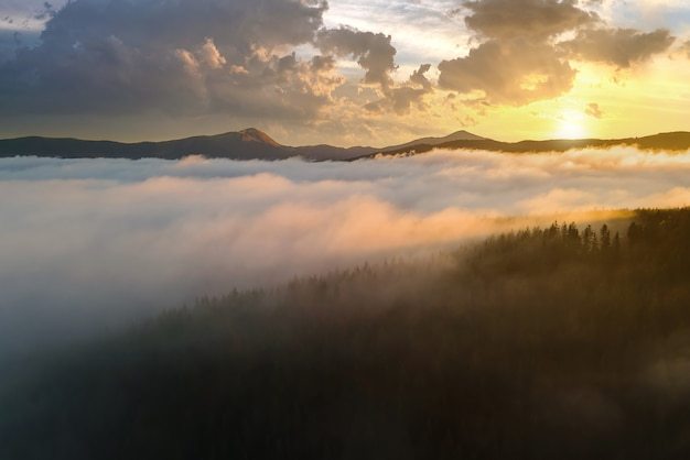 View from above of dark moody pine trees in spruce foggy forest with bright sunrise rays
