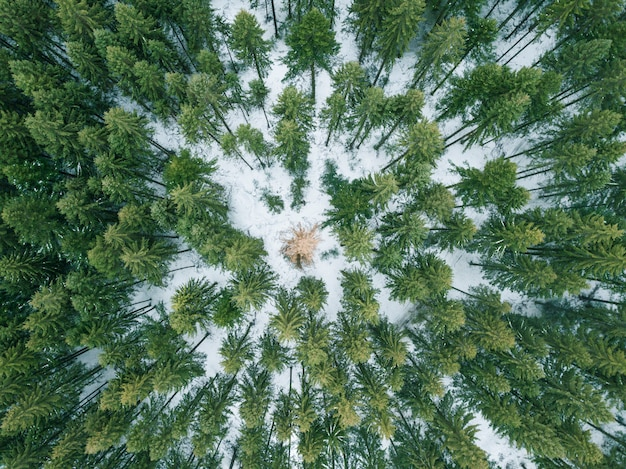 View from drone into the forest