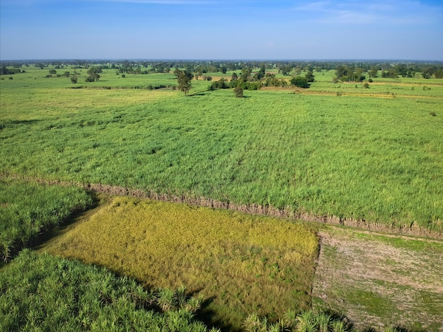View from drone sugar cane field with sunset sky nature landscape background.