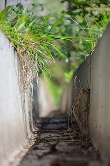 View from a dry concrete drainage gutter overgrown with green grass. shot from a low angle