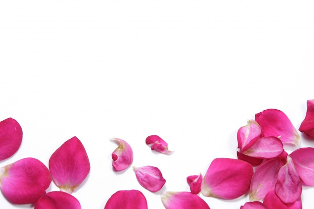 View from above flat lays petal of red rose flower on isolated white background