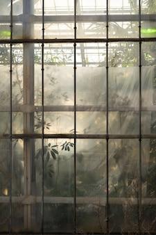 온실 창에서 유리 뒤에 실루엣 열대 식물의 외부에서보기