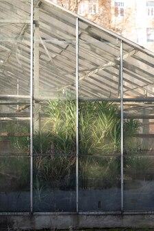 화창한 날에 겨울철 온실 창에서 유리 뒤에 열대 식물의 외부에서보기