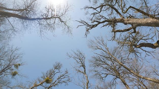 森の木々の下からの眺め。青い空は木の裸の枝を通して描かれています。葉のない樹冠のてっぺん。澄んだ雲ひとつない青空。高い木々。