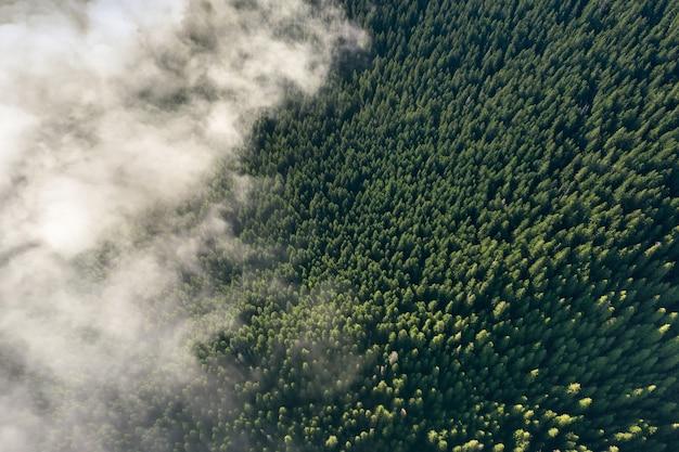 Вид с дрона на горный еловый лес.