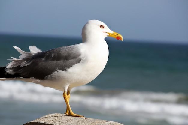 側から見ると、海を見ているカモメ海鳥。
