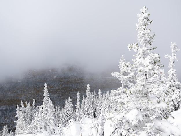 山の頂上からの眺め、最初の明るい雪で覆われたトウヒ、霧が上がります。