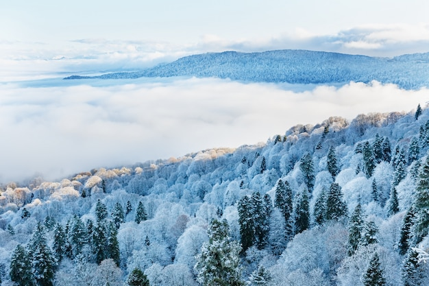 View from the top of the snow-covered forest with low-floating clouds.