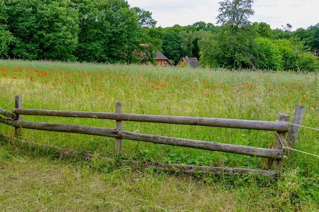 Vista di un campo in erba con alberi verdi sullo sfondo